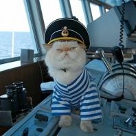Кот морской путешественник